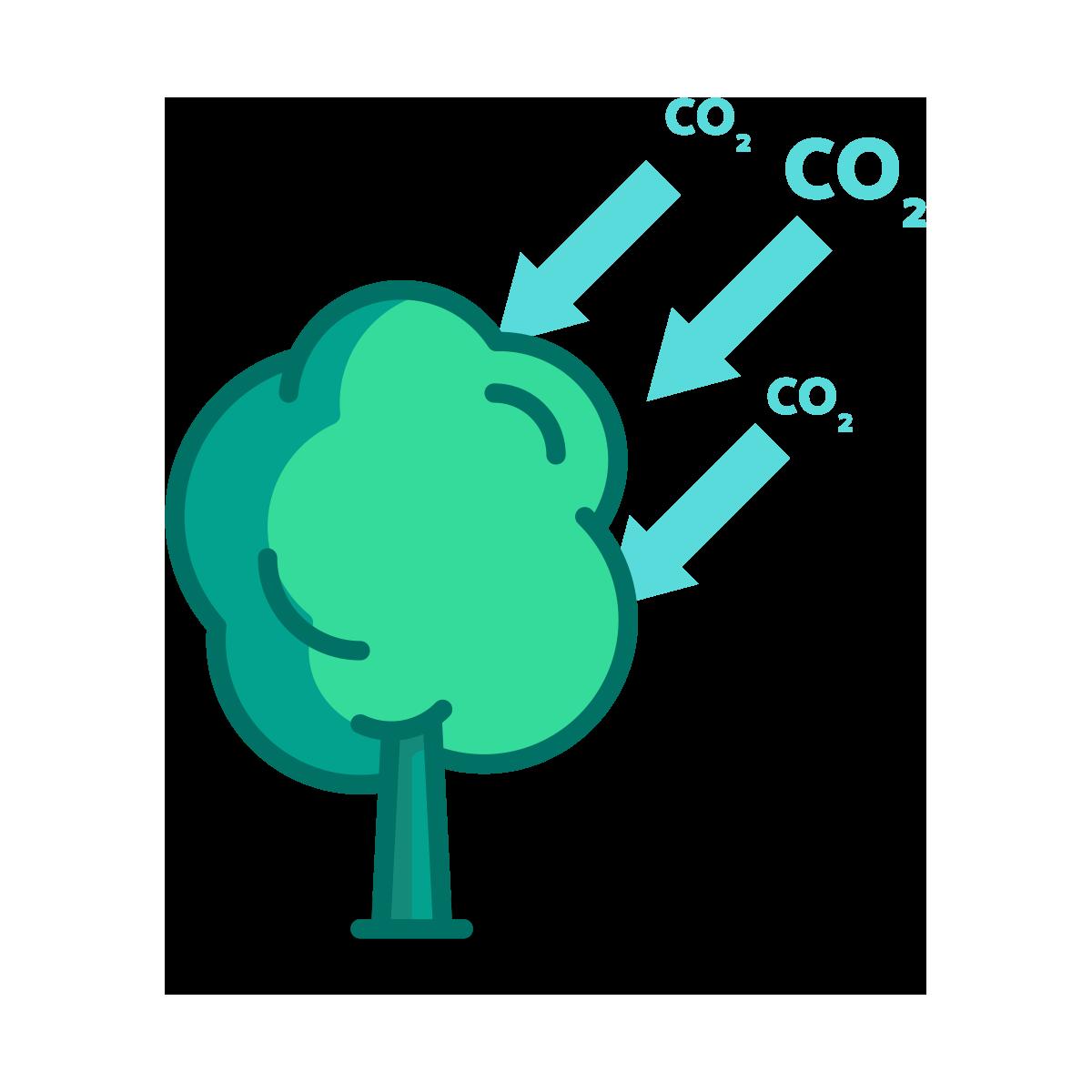 Tree Consuming Carbondioxide