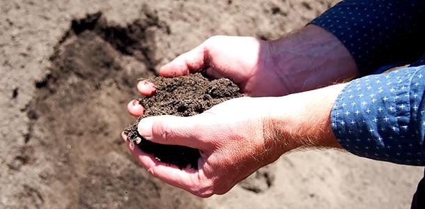 Buy Compost